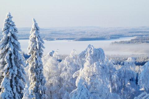 Talvi Ristijärvi