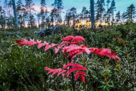 Syksyinen metsä, uutiskirje syyskuu 2021